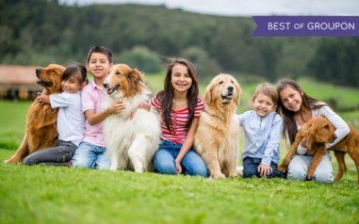 Kurs online: Behawiorystyka psa lub instruktor szkolenia psów z certyfikatem za 99 zł i więcej w Kar-Group